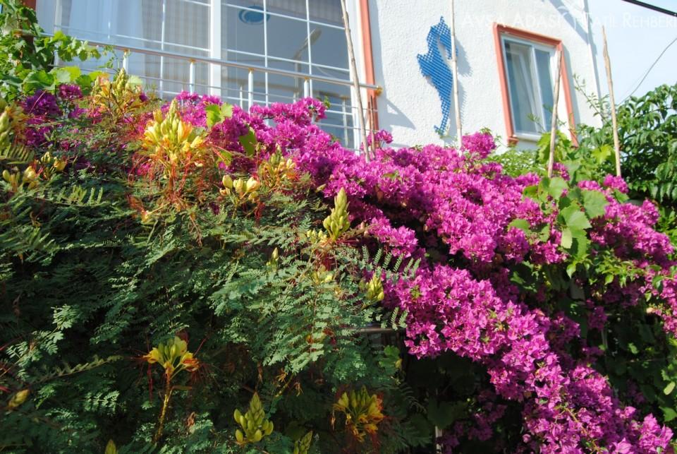 avşa adası günlük kiralık ev